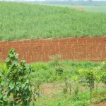 Arborização em execução